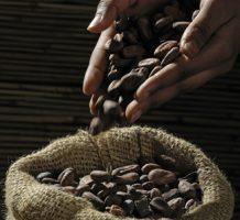 Can cocoa flavanols prevent disease?