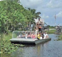 The Everglades: One watery wonderland