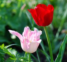 Read nature's cues for a better garden