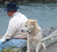 Strategies to cope with the loss of a pet