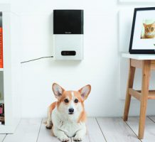 Tech lets you play with your pet from afar