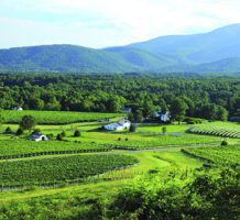Sublime wine, scenery in central Virginia
