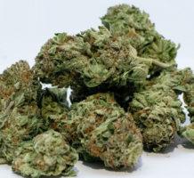 Maryland starts selling medical marijuana