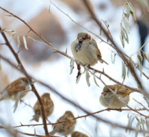 How to feed backyard birds this winter