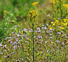 How to reduce spring allergy symptoms