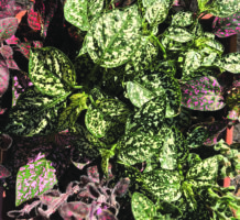 A palette of foliage colors for your garden