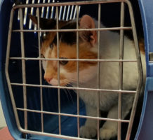 What to know about flying with your pet
