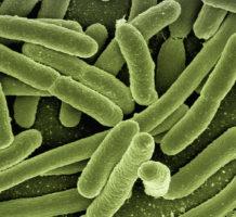 Vaccine study focuses on C. diff bacteria