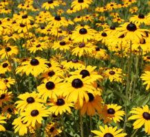 How do garden plants get their names?