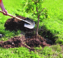 Now's the time to plant trees and shrubs