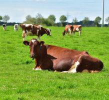 Genetic engineering down on the farm