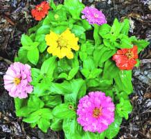 ABCs of September gardening chores