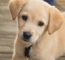 Is pet insurance a cost-effective purchase?