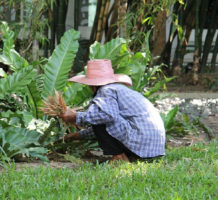 So many different benefits of gardening