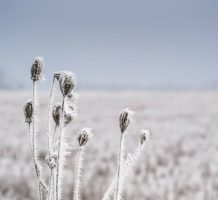 Limit winter damage to your plants