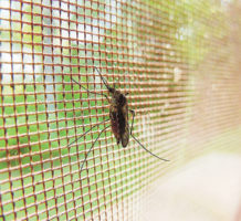 Are you itching to get rid of mosquitoes?