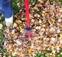 To-dos and no-nos for your autumn yard