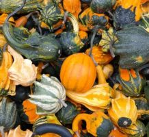 Squash buyer's guide