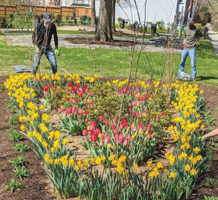 Guerilla gardeners pitch in to beautify city