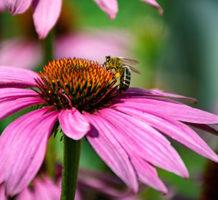 Ways plants communicate with pollinators