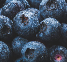 Blueberries, a native fruit and superfood