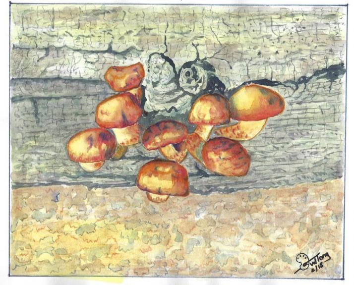 Fungi — Deryn van der Tang