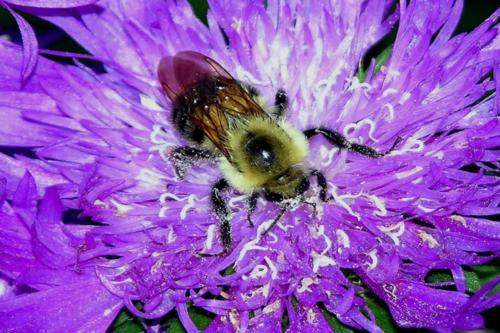 A Passion for Pollen — Arthur Einhorn