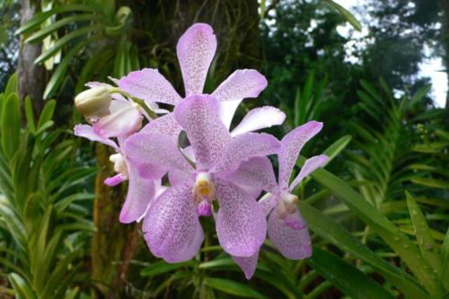 Orchid — Rick Scott