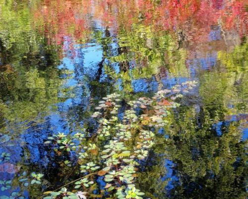 Jackson Pond autumn, Columbia MD — Anita Feintuch