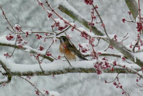 Robin in Snowstorm — Diane Kerr