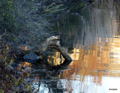 Alternate Interpretation of Nature: The Firebreathing Dragon of the Lake  — Barbara Motyka