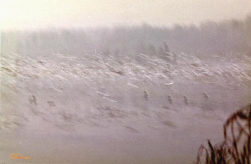 Gulls in Winter — Harry Letaw80 2 1