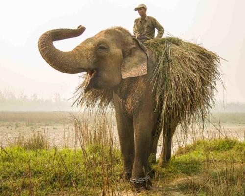 """Morning Mist""  Chitwan National Park, Nepal — Nancy Benco"