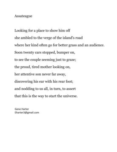 Assateague - Eugene C. Harter - Honorable Mention